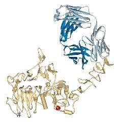 Trastuzumab gebunden an HER2